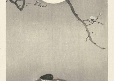 Ohara Koson, Eenden bij volle maan, 1900-1945